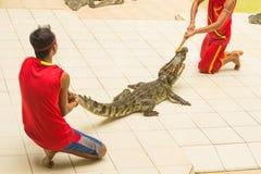 Η Ταϊλάνδη, ζωολογικός κήπος παρουσιάζει των κροκοδείλων στο αγρόκτημα και το ζωολογικό κήπο κροκοδείλων Στοκ φωτογραφία με δικαίωμα ελεύθερης χρήσης
