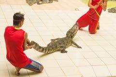 Η Ταϊλάνδη, ζωολογικός κήπος παρουσιάζει των κροκοδείλων στο αγρόκτημα και το ζωολογικό κήπο κροκοδείλων Στοκ Φωτογραφίες