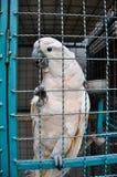 Η Ταϊλάνδη, Phuket, καταδικάζει τον παπαγάλο Στοκ Φωτογραφία