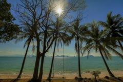 Η ταλάντευση κρεμά από το δέντρο καρύδων πέρα από την παραλία όμορφες νεολαίες γυναικών διακοπών λιμνών έννοιας Στοκ Φωτογραφίες