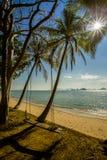 Η ταλάντευση κρεμά από το δέντρο καρύδων πέρα από την παραλία όμορφες νεολαίες γυναικών διακοπών λιμνών έννοιας Στοκ Εικόνες