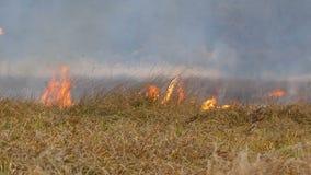 Η τεράστια φλόγα της πυρκαγιάς καίει τη φύση γύρω Ξηρά εγκαύματα χλόης στεπών με μια μεγάλη φλόγα Άγρια πυρκαγιά στη δασική στέπα φιλμ μικρού μήκους