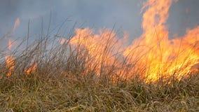 Η τεράστια φλόγα της πυρκαγιάς καίει τη φύση γύρω Ξηρά εγκαύματα χλόης στεπών με μια μεγάλη φλόγα Άγρια πυρκαγιά στη δασική στέπα απόθεμα βίντεο