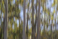 Η τεχνική γνωστή ως βράση κάνει μια ονειροπόλο σκηνή του copse των δέντρων Στοκ εικόνες με δικαίωμα ελεύθερης χρήσης