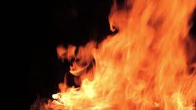 Η τηλεοπτική πυρκαγιά απόθεμα βίντεο