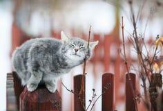 Η τιγρέ γάτα εχαΐδευσε σε έναν κλάδο την άνοιξη σε έναν φράκτη στη βίλα στοκ εικόνες με δικαίωμα ελεύθερης χρήσης