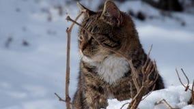 Η τιγρέ γάτα κάθεται στο χιόνι και πολύ ανησύχησε απόθεμα βίντεο