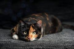 Η τιγρέ γάτα στον καναπέ εξετάζει τη κάμερα Στοκ Εικόνες