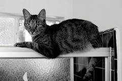Η τιγρέ γάτα χαλαρώνει στη συρόμενη πόρτα ντους ` s Στοκ φωτογραφία με δικαίωμα ελεύθερης χρήσης