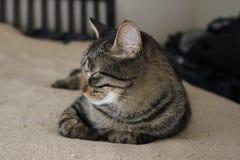Η τιγρέ γάτα χαλαρώνει στο κρεβάτι στοκ εικόνες