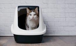 Η τιγρέ συνεδρίαση γατών σε ένα κιβώτιο απορριμάτων και κοιτάζει στη κάμερα Στοκ φωτογραφία με δικαίωμα ελεύθερης χρήσης