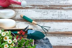 Η τοπ άποψη σχετικά με φτυάρι κηπουρικής ένα γέμισε με το χώμα και ανθίζει το σε δοχείο εργαλείο στο χρόνο θερινής άνοιξης κήπων, στοκ εικόνες