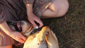 Η τοπ άποψη του σκυλιού βρίσκεται σε ετοιμότητα χλόης και γυναικών κτυπώντας το φιλμ μικρού μήκους