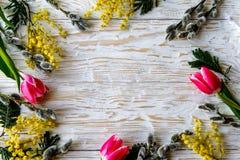 Η τουλίπα, ένα mimosa, σύνορα άνοιξη λουλουδιών ιτιών πέρα από το άσπρο υπόβαθρο Στοκ Εικόνες