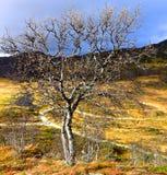 η τράπεζα φθινοπώρου χρωματίζει το γερμανικό δέντρο ποταμών του Ρήνου κίτρινο Στοκ φωτογραφία με δικαίωμα ελεύθερης χρήσης