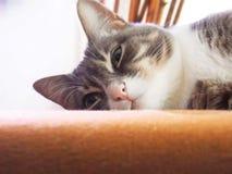 Η τρυπημένη γάτα γατακιών Στοκ εικόνα με δικαίωμα ελεύθερης χρήσης