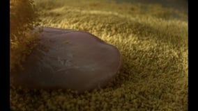Η τρυφερή λωρίδα κοτόπουλου περιέρχεται στο πασπάλισμα με ψίχουλα φιλμ μικρού μήκους