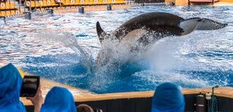 Η φάλαινα δολοφόνων βουτά Στοκ Φωτογραφία