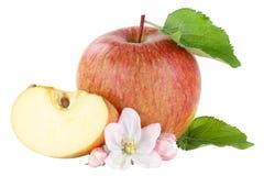 Η φέτα φρούτων της Apple τεμάχισε το άνθος που απομονώθηκε στο λευκό Στοκ Εικόνα
