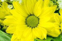 η φαντασία ανασκόπησης ανθίζει το πράσινο διάνυσμα απεικόνισης κίτρινο Στοκ Εικόνα