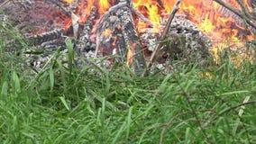 Η φλόγα πυρκαγιάς καταστρέφει την πανίδα και τη χλωρίδα στη φύση 4K απόθεμα βίντεο