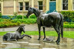 Η φοράδα και foal Στοκ Φωτογραφίες