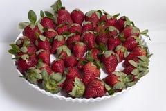 Η φράουλα κήπων είναι ένα ευρέως αυξημένο υβριδικό είδος του γένους Fragaria, συλλογικά γνωστό ως φράουλες στοκ εικόνες