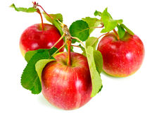 Η φρέσκια γλυκιά νόστιμη κόκκινη Apple που απομονώνεται στο άσπρο υπόβαθρο Στοκ φωτογραφίες με δικαίωμα ελεύθερης χρήσης