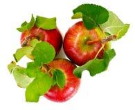 Η φρέσκια γλυκιά νόστιμη κόκκινη Apple που απομονώνεται στο άσπρο υπόβαθρο Στοκ εικόνα με δικαίωμα ελεύθερης χρήσης