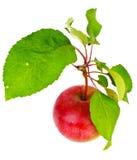 Η φρέσκια γλυκιά νόστιμη κόκκινη Apple που απομονώνεται στο άσπρο υπόβαθρο Στοκ Φωτογραφίες