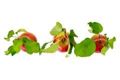 Η φρέσκια γλυκιά νόστιμη κόκκινη Apple που απομονώνεται στο άσπρο υπόβαθρο Στοκ φωτογραφία με δικαίωμα ελεύθερης χρήσης