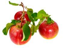 Η φρέσκια γλυκιά νόστιμη κόκκινη Apple που απομονώνεται στο άσπρο υπόβαθρο Στοκ Εικόνες