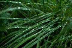 Η φρέσκια πράσινη χλόη με τη δροσιά μειώνεται κοντά επάνω Στοκ Εικόνες