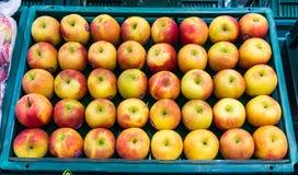 Η φρέσκια Apple Στοκ Φωτογραφίες