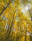 Η φυσική ομορφιά των δύσκολων βουνών του Κολοράντο Στοκ Εικόνες