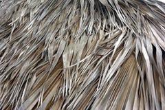Η φυσική σύσταση του αχύρου, ξεραίνει τα φύλλα Στοκ Εικόνες
