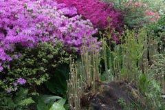 Η φυτεία της Isabella, πάρκο του Ρίτσμοντ στοκ φωτογραφίες