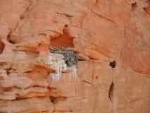 Η φωλιά πουλιών ` s έκανε σε μια ατέλεια στον ψαμμίτη και γέμισε με τους κλαδίσκους και τους κλάδους γύρω από την κόκκινη περιοχή Στοκ Φωτογραφίες