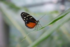 η φωτεινή πεταλούδα χρωμάτ& Στοκ φωτογραφία με δικαίωμα ελεύθερης χρήσης