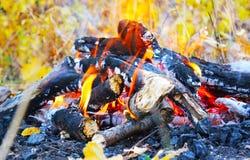 Η φωτιά, ξεραίνει τα φύλλα, κλαδίσκοι Στοκ φωτογραφία με δικαίωμα ελεύθερης χρήσης