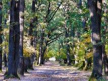 Η φωτογραφία του δάσους στο χρόνο φθινοπώρου με βγάζει φύλλα στο έδαφος στοκ εικόνα με δικαίωμα ελεύθερης χρήσης