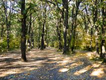 Η φωτογραφία του δάσους στο χρόνο φθινοπώρου με βγάζει φύλλα στο έδαφος στοκ φωτογραφίες