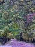 Η φωτογραφία του δάσους στο χρόνο φθινοπώρου με βγάζει φύλλα στο έδαφος στοκ φωτογραφία με δικαίωμα ελεύθερης χρήσης