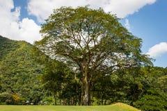 Η φωτογραφία φύσης, γήπεδο του γκολφ και χαλαρώνει στο Καράκας, Βενεζουέλα Στοκ Εικόνες