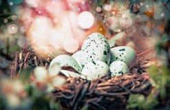 Η φωλιά πουλιών με τα αυγά στο υπόβαθρο ανθών θάμνων άνοιξης, κλείνει επάνω ανασκόπηση Πάσχα που χαιρετά το διαστημικό κείμενο Στοκ εικόνα με δικαίωμα ελεύθερης χρήσης