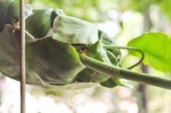 Η φωλιά του μυρμηγκιού ή το μυρμήγκι συχνάζει Στοκ Εικόνες