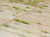 Η φύση βρίσκει πάντα έναν τρόπο Στοκ φωτογραφία με δικαίωμα ελεύθερης χρήσης