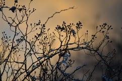 Η φύση είναι το δώρο το χειμώνα κοιτάζει γύρω Στοκ φωτογραφία με δικαίωμα ελεύθερης χρήσης