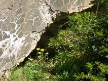 Η φύση κερδίζει Στοκ Εικόνες