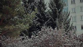 Η φύση μετά από τις πρώτες χιονοπτώσεις φιλμ μικρού μήκους